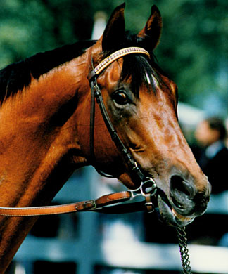 Alysheba: 1988 Horse of the Year; 1987 Champion 3-year old; 26 starts, 11 wins, 8 seconds, 2 thirds, $6,679,242 earned.