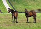 La Ville Rouge and her 2009 Dynaformer colt