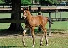 Foals of 2007