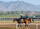 2013 Breeders' Cup Week