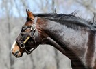 Preakness and Belmont Stakes Winner Hansel
