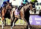Most Physically Impressive Female Horses