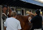 Fasig-Tipton Saratoga 2007 Yearling Sales