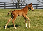 Rags to Riches' First Foal