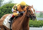 2012 Horse of the Year Wise Dan
