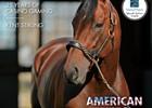 New Stallions of 2016