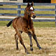 Curlin's First Foal