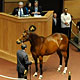 Fasig-Tipton November Sale featuring Better Than Honour