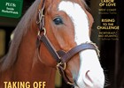 New Stallions of 2015