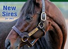 New Sires of 2011