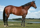 View the 2013 Online Stallion Showcase.