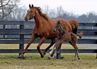 Easter Bunnette and her 2012 Filly