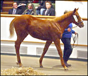 Live Oak Buys Giant's Causeway Filly for Record Price