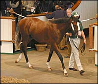 Kingmambo Colt Tops Opening Session of Tattersalls Sale