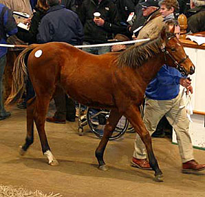 Tattersalls Dec. Foal Sale Day 3