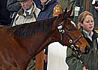 Tattersalls Dec. Foal Sale Day Four