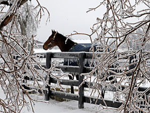 KY Farms Deal With Ice Storm Aftermath