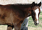 First Foal by Bedford Falls Is a Colt