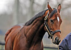 Slideshow: New Sires of 2011