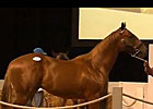 2013 Cape Premier Yearling Sales Review