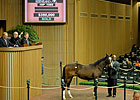 Medaglia d&#39;Oro Colt Fetches $350,000