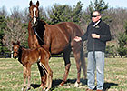 Slideshow: New Foals of 2013