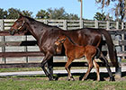 First Foal Reported for Spendthrift's Liaison