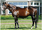 A.P. Indy Leading Covering Sire