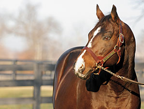 A.P. Indy Among 2010 Commercial Sire Leaders