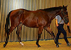 Pour Moi Colt Tops Yearling Action at Arqana