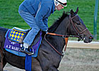 Strong Bernardini Contingent in Breeders&#39; Cup