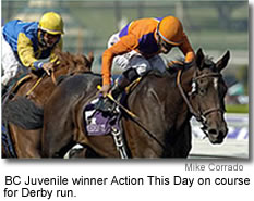 Pedigree Profile: Action This Day