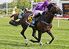 Fawkner, Adelaide Among Cox Plate Favorites