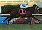 Pletcher May Have Another Late Bloomer