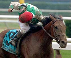 Steve Haskin's Belmont Story: Crescendo