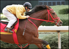 Afleet Alex to Make 2005 Debut in Mountain Valley Stakes