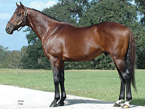 Agnes Gold's First Foal