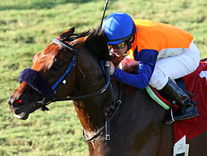 Al Qasr wins the 2013 Kitten's Joy.