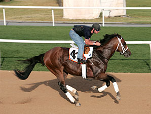 Albertus Maximus Gallops at Nad Al Sheba