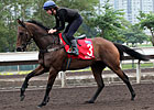 Hong Kong Cup Day: Trackwork December 8, 2012