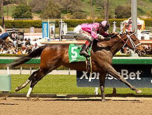 Alert Bay wins the 2014 Echo Eddie Stakes.