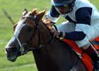 Gr. I Winner Alexander Tango Dead