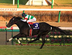 Unbeaten Alfredo Captures Asahi Hai Futurity