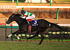 Unbeaten Alfredo Captures Asahi Hai Futurity