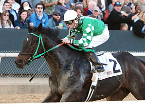 All About Allie wins the 2013 Downthedustyroad Breeders' Stakes.