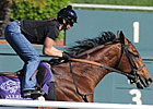Longshot Allegre Scratched Out of Turf