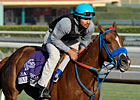 Peruvian-Bred Makes Breeders&#39; Cup History