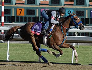 Almudena works at Santa Anita 10/29/2012.