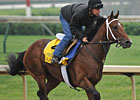 Alpha Under Consideration for Belmont Stakes