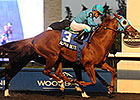 Alpha Bettor Up in Time in Woodbine's Autumn